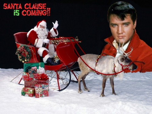 elvis presley fondo de pantalla probably with a lippizan and a horse trail entitled navidad Elvis