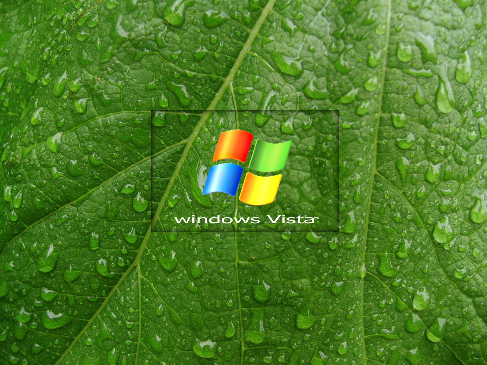 Green Leaf Vista001 Windows 7 Vista Xp Picks 壁紙 ファンポップ