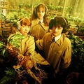 Harry, Ron and Hermione at Herbology Class