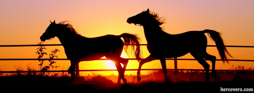 Horse Facebook cover for timeline