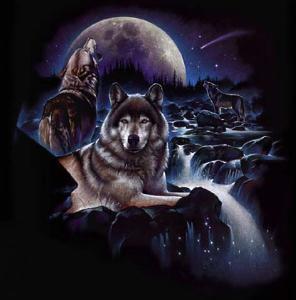 Night волк