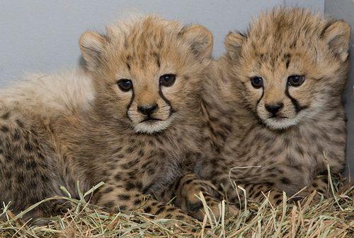 cute Tiere ^^