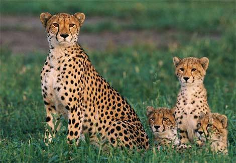 cute animais ^^