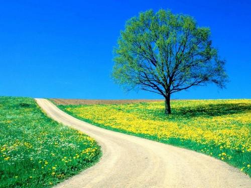 Windows 7 Vista XP Picks Wallpaper With A Spurge Entitled Flowers Spring Road