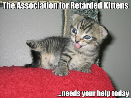 Animal Humor wallpaper containing a tabby, a tabby, and a cat titled retarded