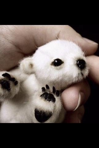 tiny Животные ^^