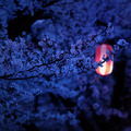 Blossom Tree Lamp Light - teampeeta649 photo