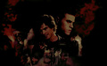 Damon & Stefan - anjs-angels wallpaper