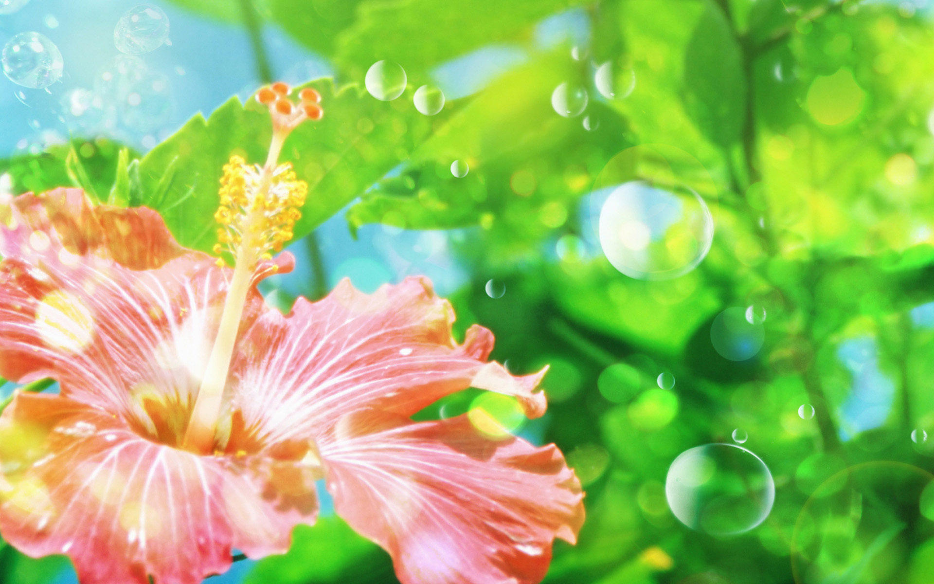 Windows 7 vista xp picks flower wallpapers
