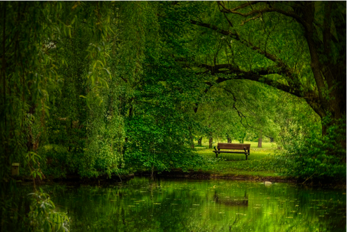 Lone Bench in a Forest of Green