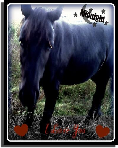 MY Horse MIdnight My Equine BFFL