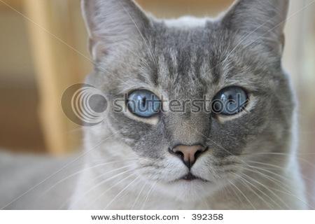 Owlpool--Medicine Cat