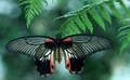 Rare Schmetterlinge