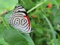 Rare 나비