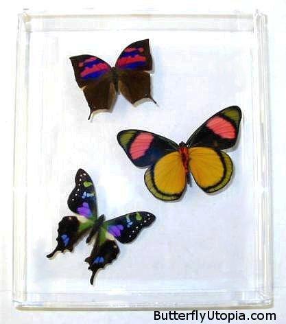 Butterflies images Rare Butterflies wallpaper and background photos