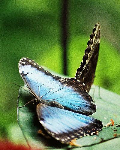 Rare Butterflies