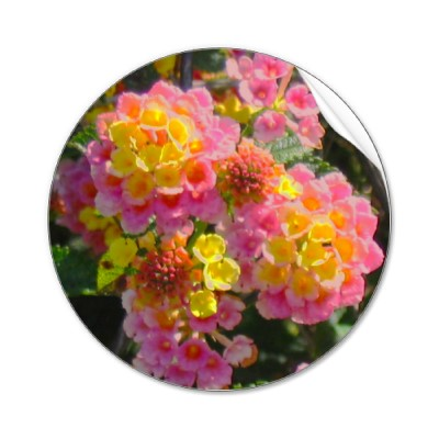 Rare 꽃
