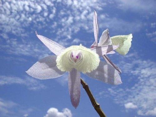 Rare Blumen