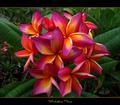 Rare fiori