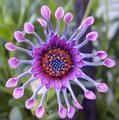Rare fleurs