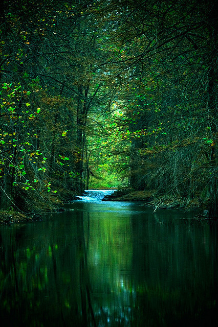River Through the Forest