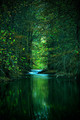 River Through the Forest - teampeeta649 photo