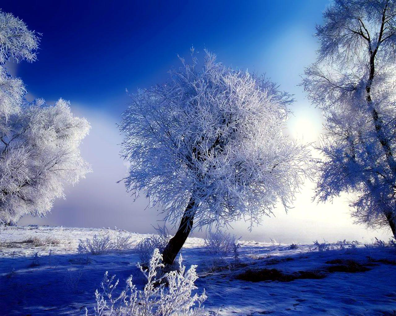 Погода в тульская область веневский район