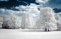 Wonderful Winter - winter photo