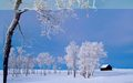 Wonderful Winter - winter wallpaper
