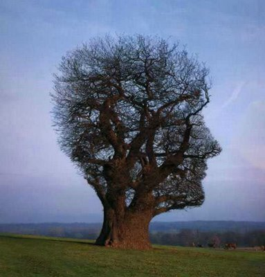 Amazing trees - paranormal-lovers Photo