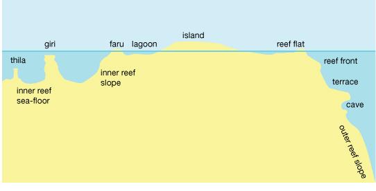 Coral scogliera, barriera corallina