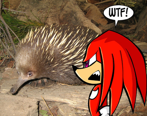 Knuckles in real world looks like that?