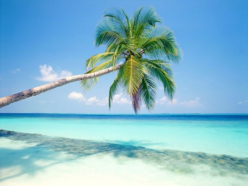 Maldives wallpaper with a beach, an oceanfront, and a seashore entitled Maldives