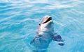 Ocean động vật