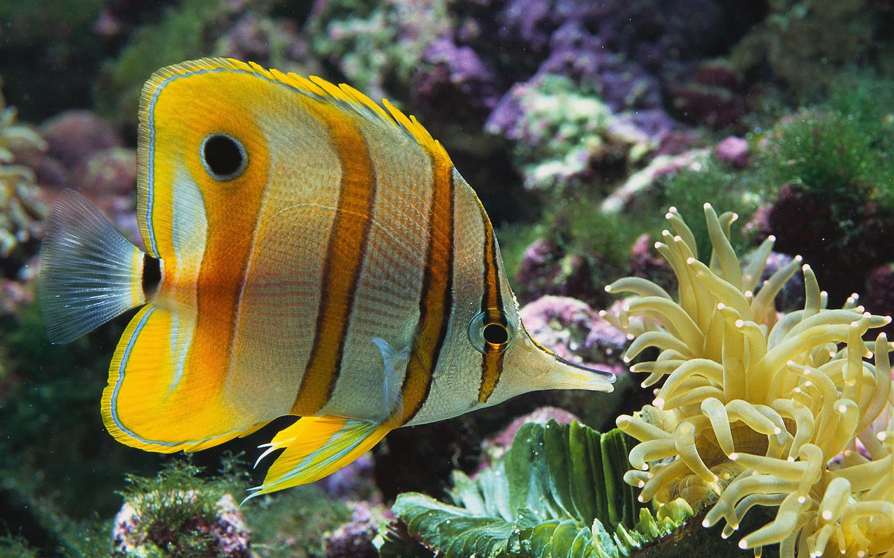 Animals images ocean animals hd wallpaper and background for Are fish animals