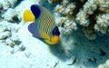 Ocean जानवर