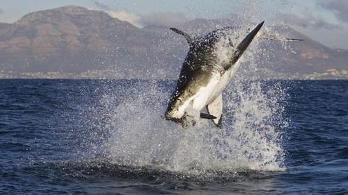 Ocean animaux
