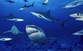animals - Ocean Animals wallpaper