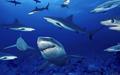 Ocean animais