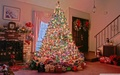 Pretty Christmas Tree For Berni <3 - yorkshire_rose wallpaper