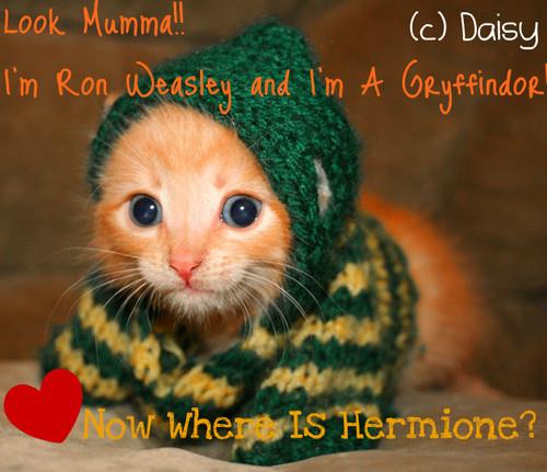 Weasley Cat