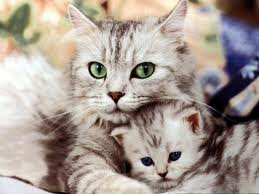 cute kittens - lightsky-clan Photo