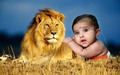 lion baby - babies wallpaper