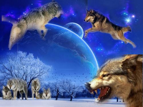 serigala collection