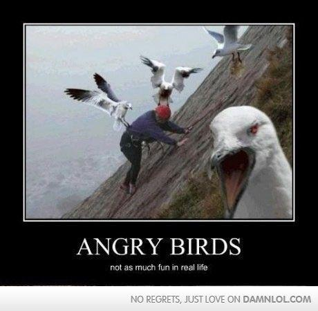 angry birds wallpaper called Angry Birds Funnies!