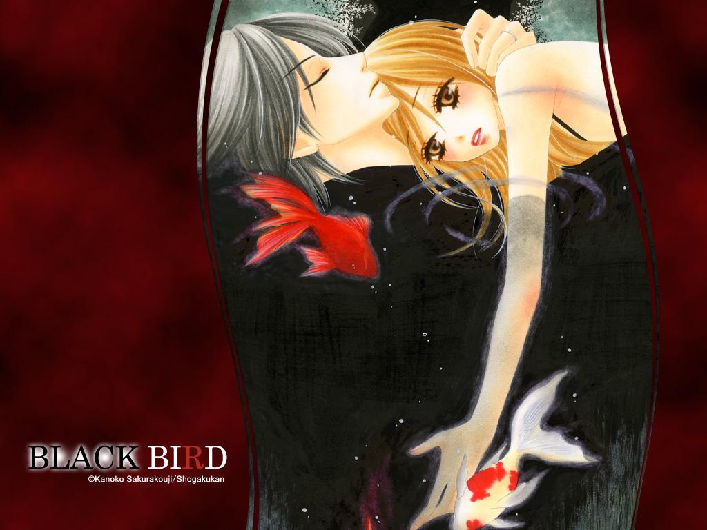 http://images5.fanpop.com/image/photos/28000000/Black-Bird-black-bird-E3-83-96-E3-83-A9-E3-83-83-E3-82-AF-E3-83-90-E3-83-BC-E3-83-89-28035889-1024-768.jpg