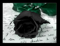 Black Rose - gothic photo