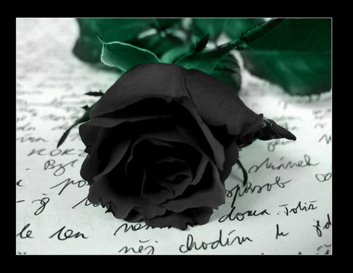 Gothic images Black Rose HD wallpaper and background photos
