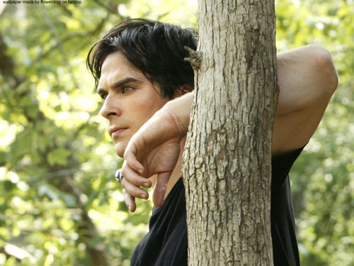 Damon Salvatore kertas dinding possibly with a mahogany entitled Damon Salvatore ✯