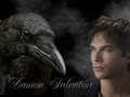 Damon and Crow - damon-salvatore wallpaper